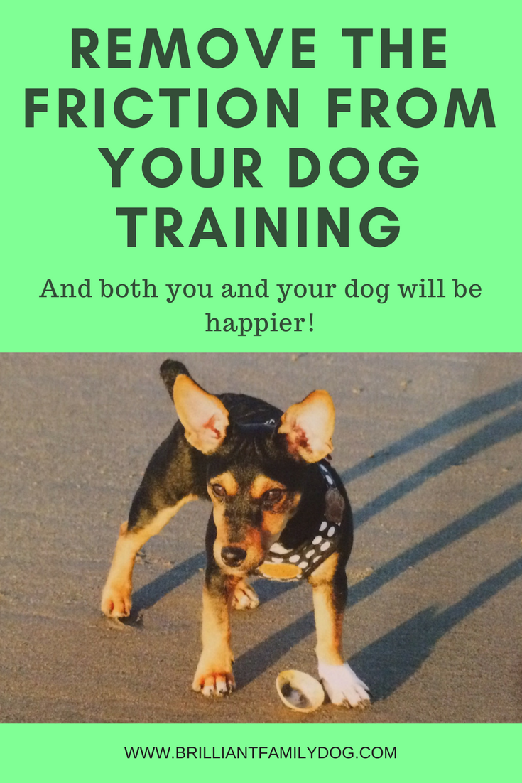 Dog training, new puppy, puppy training, dog recall training | Remove the friction from your dog training and both you and your dog will be happier! | FREE EMAIL COURSE | #newpuppy, #dogtraining, #newrescuedog, #puppytraining, #dogbehavior | www.brilliantfamilydog.com