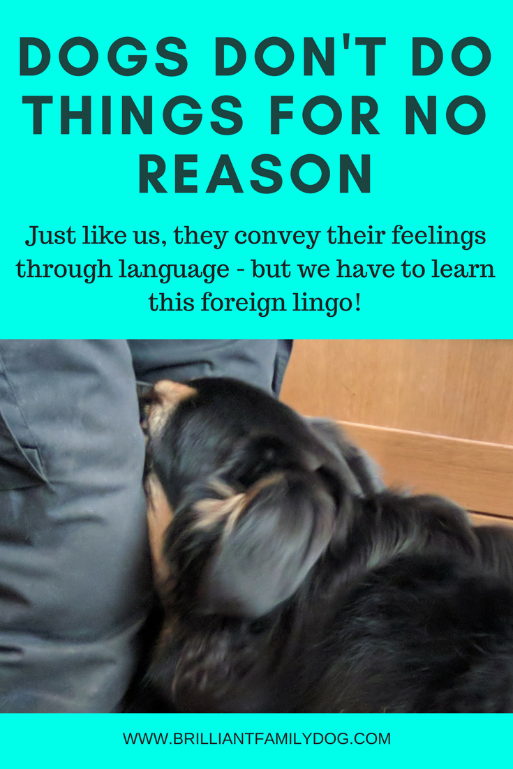 Reactive dog, aggressive dog, fearful dog, dog behavior | Dogs don't do things for no reason - learn their language!  | FREE EMAIL COURSE | #aggressivedog, #reactivedog, #dogtraining, #growlydog | www.brilliantfamilydog.com