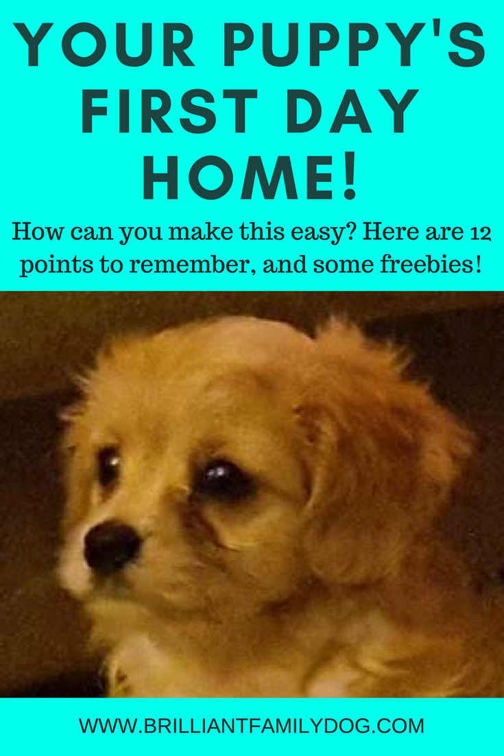 Wonderlijk Your puppy's first day home! — Brilliant Family Dog HF-76
