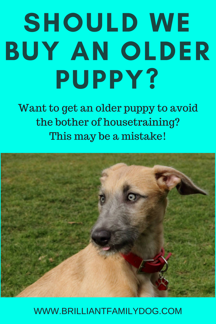 Dog training, new puppy, puppy training | Should you get an older puppy? You may think you're avoiding problems, but you may be making more for yourself!  | FREE GUIDE | #newpuppy, #housetraining,  #puppytraining, #dogbehavior | www.brilliantfamilydog.com