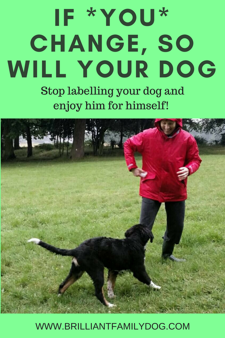 Reactive dog, aggressive dog, fearful dog, dog behavior   It's not the dog that has to change! Change your own mindset and change your dog!    FREE EMAIL COURSE   #aggressivedog, #reactivedog, #dogtraining, #growlydog   www.brilliantfamilydog.com