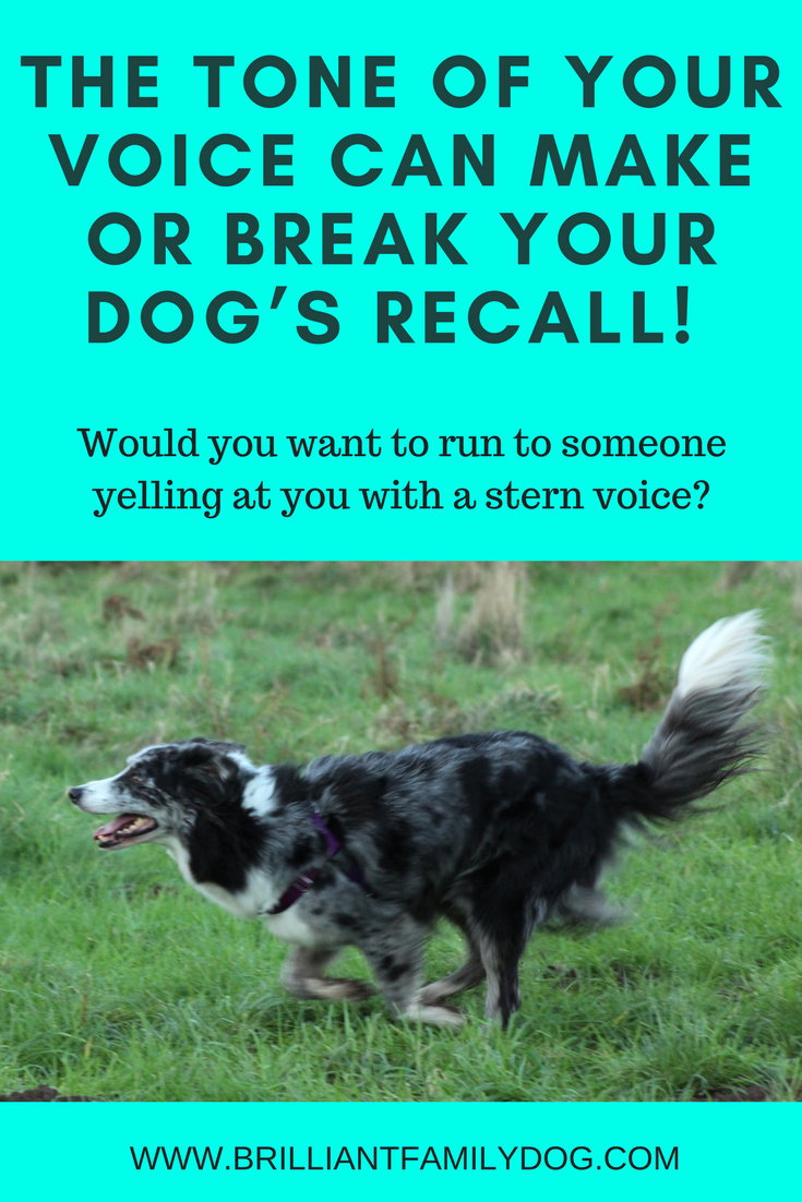 Teach your dog to come back on one call - every time - by changing the way you call her! | FREE GUIDE | Dog training, new puppy, puppy training, dog recall training | #newpuppy, #dogtraining, #newrescuedog, #puppytraining, #dogbehavior | www.brilliantfamilydog.com