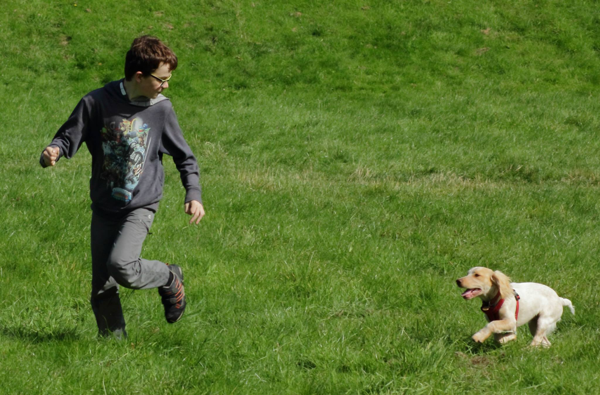 This puppy is loving chasing after his young owner   FREE GUIDE   Dog training, new puppy, puppy training, dog recall training   #newpuppy, #dogtraining, #newrescuedog, #puppytraining, #dogbehavior   www.brilliantfamilydog.com