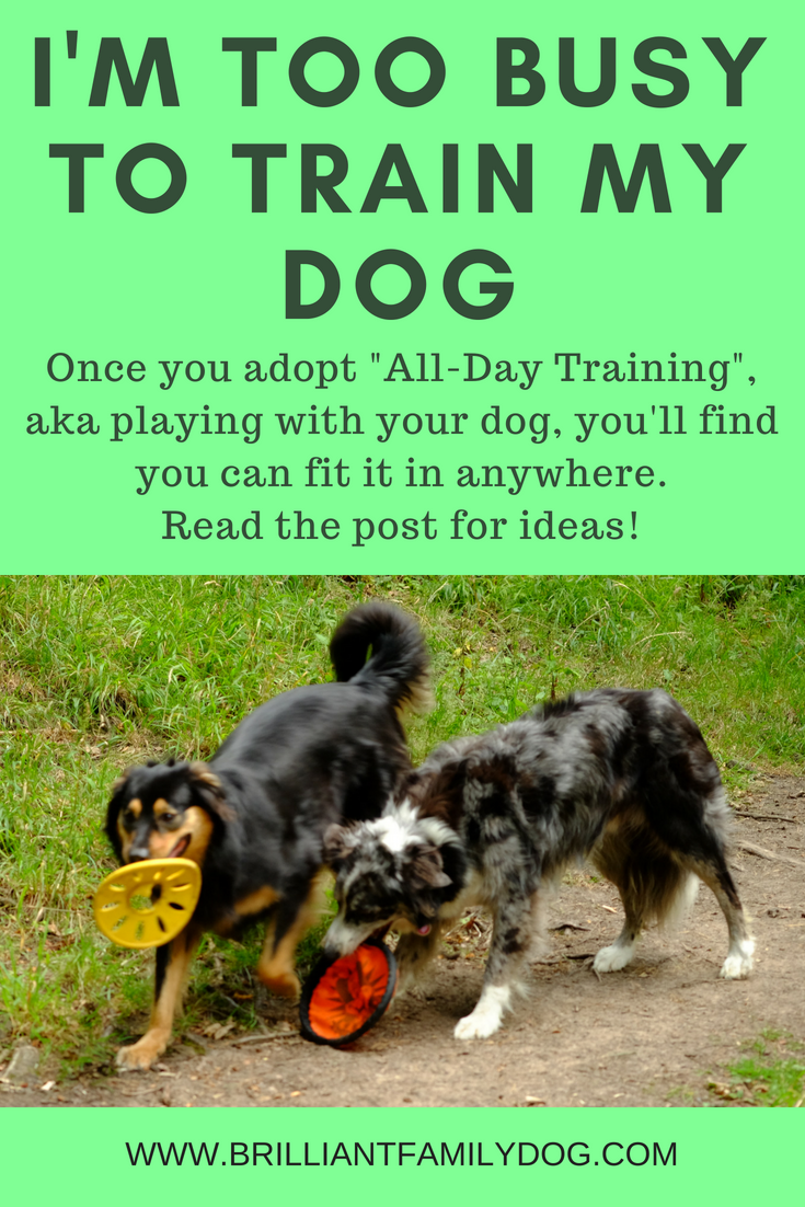 Teach your dog everything you want him to learn, one minute at a time! | FREE EMAIL COURSE | Dog training, new puppy, puppy training, dog retrieve training | #newpuppy, #dogtraining, #newdog, #puppytraining, #dogbehavior | www.brilliantfamilydog.com