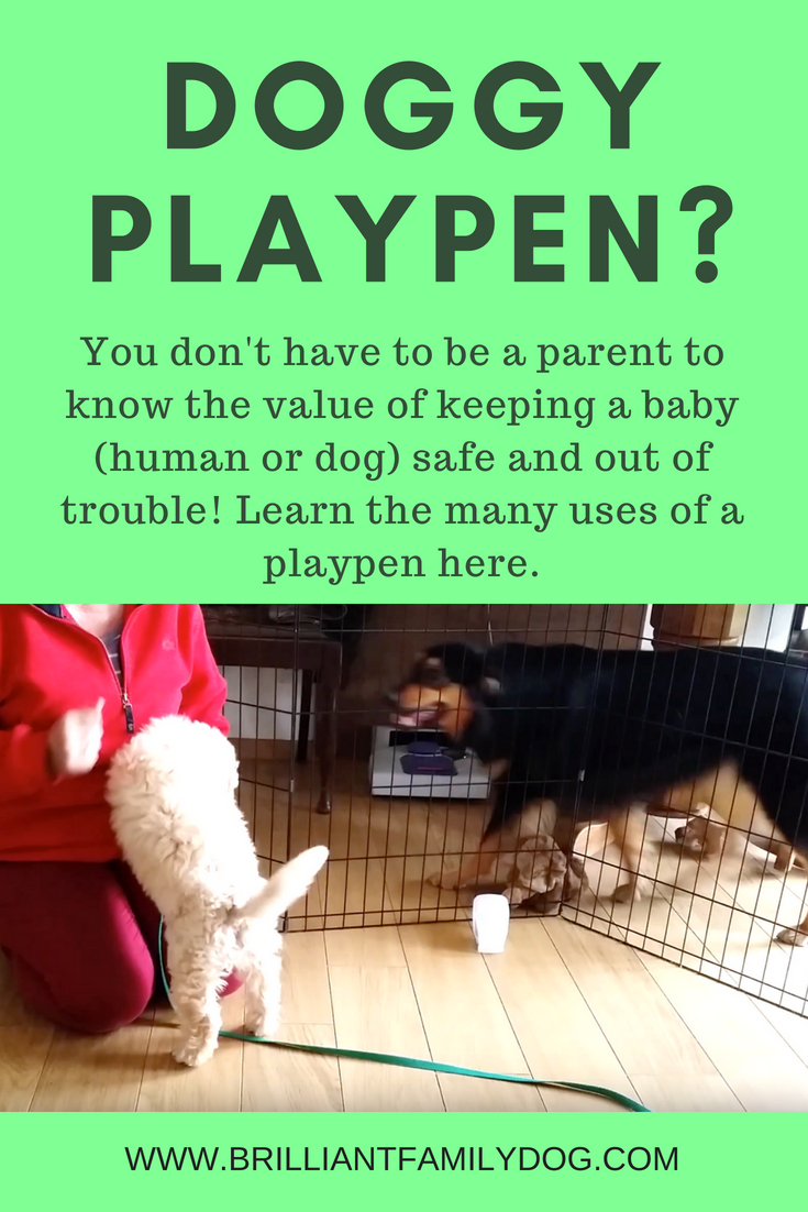 Dog trainers as well as parents know the value of keeping your new puppy safe - from electrical wires, other dogs in the house - and keeping them safe from your puppy! Along with children, cats, and grannies | FREE GUIDE | #newpuppy, #dogtraining, #newrescuedog, #puppytraining, #dogbehavior, #dogsandcats | www.brilliantfamilydog.com