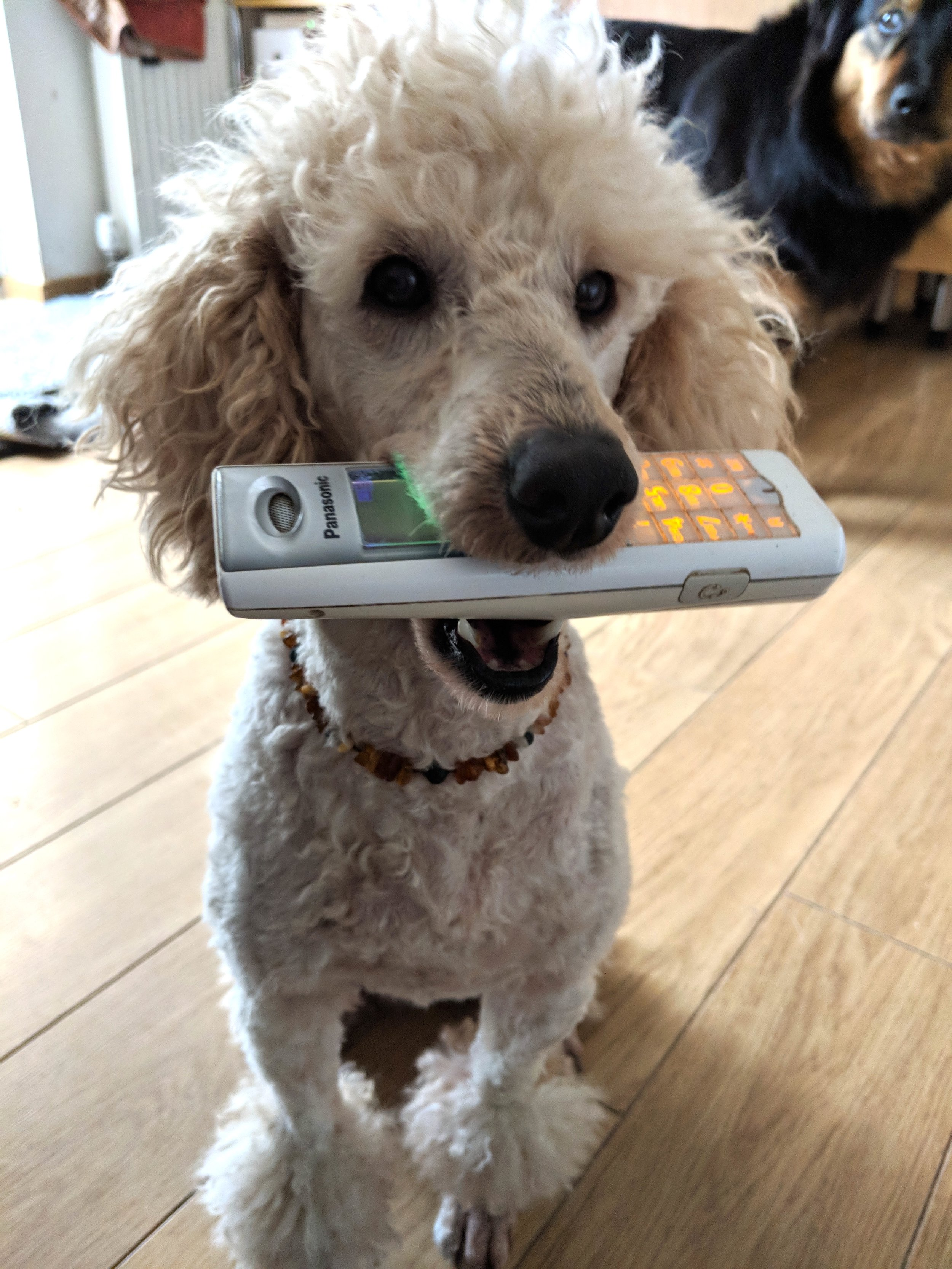Lost your car keys? Get your dog to find them for you