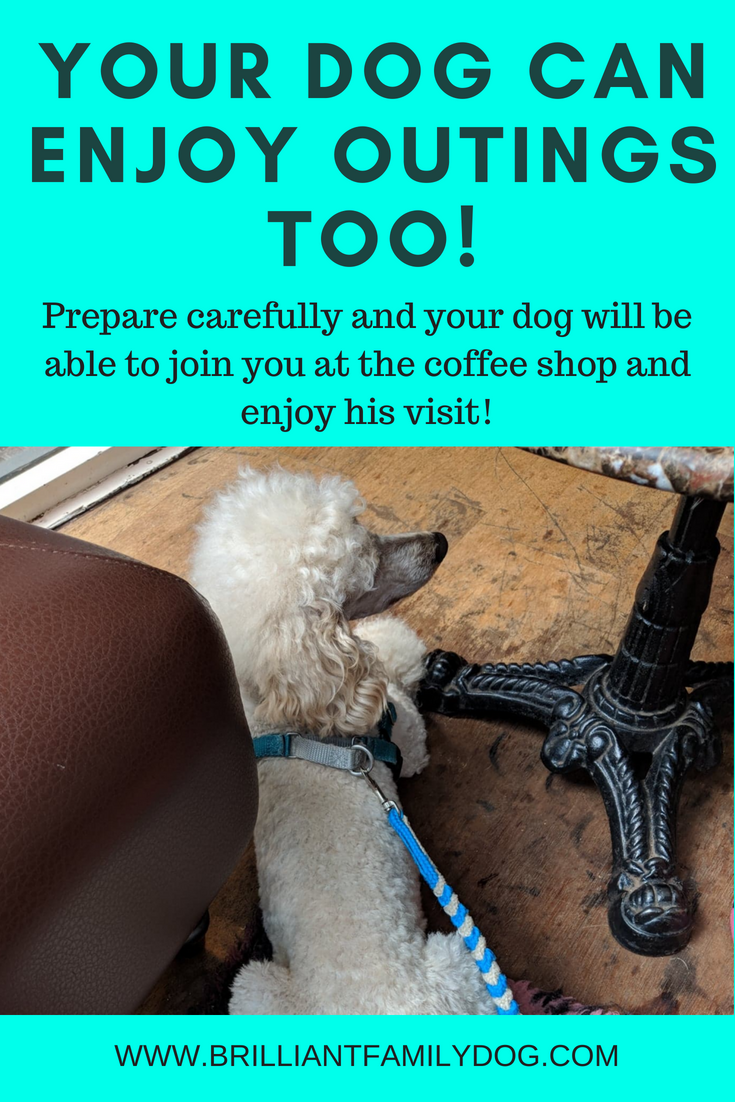 Want to take your shy dog to a cafe? You can! Follow the suggestions here and you can make it work, and really enjoy your family dog | FREE VIDEO COURSE | #problemdog, #reactivedog, #dogtraining, #growlydog, #puppysocialisation | www.brilliantfamilydog.com