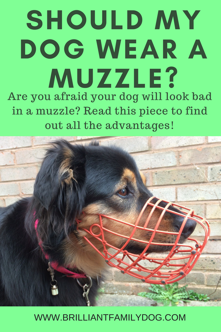 Should my dog wear a muzzle? I'm worried that people will think my dog is aggressive and I'm a bad dog-owner! Find out here how to teach your dog to love wearing a muzzle | FREE EMAIL COURSE | #aggressivedog, #reactivedog, #dogtraining, #growlydog, #dogmuzzle, #dogmuzzletraining | www.brilliantfamilydog.com