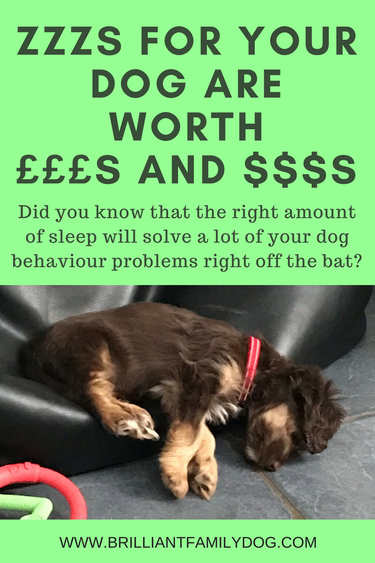 How much does my puppy need to sleep? Most people are shocked to hear this answer! Check it out and instantly get a calmer, nip-free home | FREE BOOK! | #newpuppy, #dogtraining, #newrescuedog, #puppynipping, #doghealth, #dogbehavior, #dogsleep, #overexciteddog | www.brilliantfamilydog.com