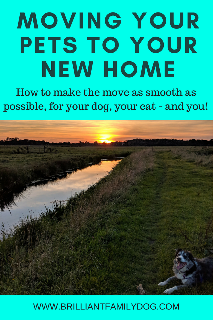 Moving house with your dog (and cat)? Make life easy for yourselves with some forward planning | FREE EMAIL TIPS | #dogbehavior, #dogsandcats, #travellingwithpets, #movinghouseanddogs, #dogtraining, | www.brilliantfamilydog.com