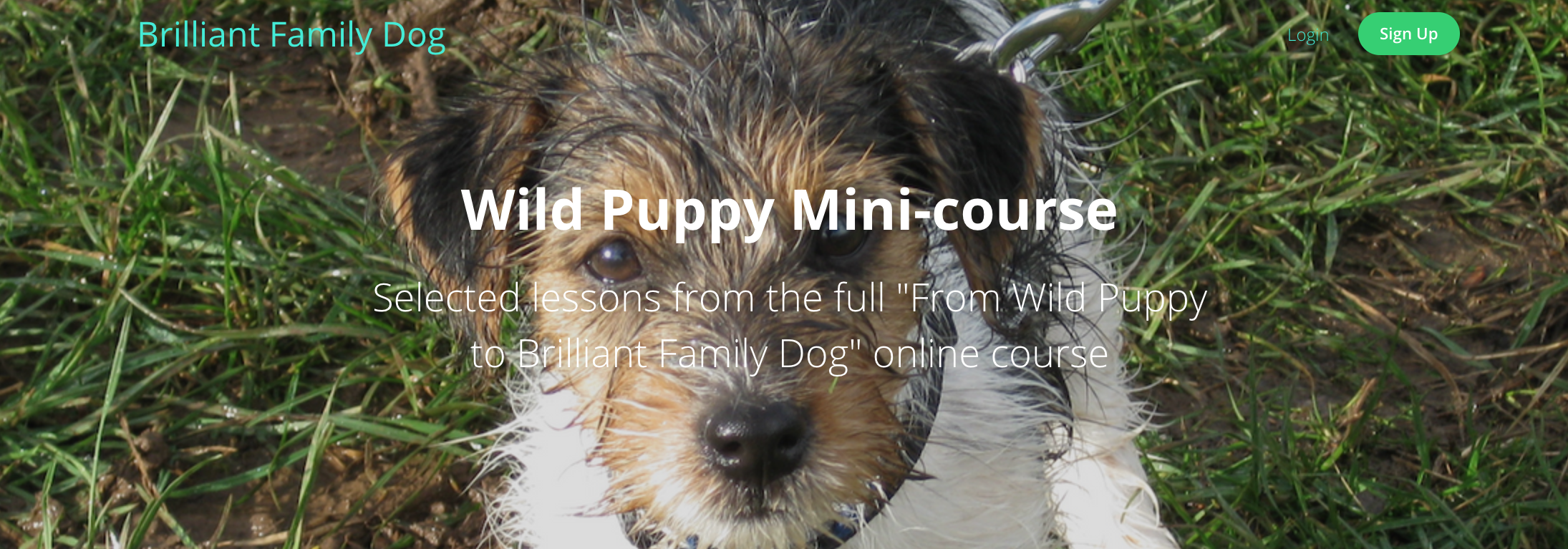 Puppy mini-course | www.brilliantfamilydog.com