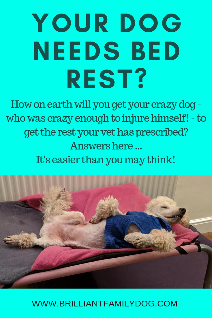 The vet has said your dog needs bed rest? Then you must ensure this happens. But how? Read this post for essential guidelines | FREE BOOK | #newpuppy, #dogtraining, #newrescuedog, #doghealth, #dogbehavior, #dogimpulsecontrol | www.brilliantfamilydog.com