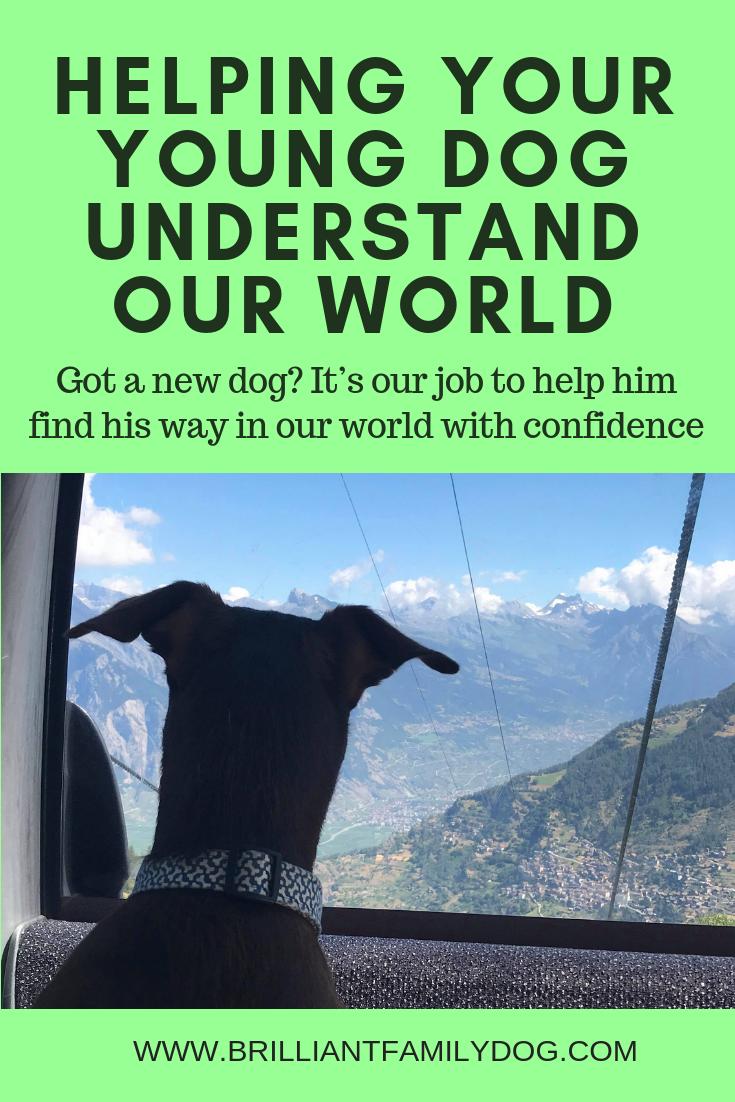How do you get your new dog to explore the world with confidence? | FREE ECOURSE | #newpuppy, #dogtraining, #newrescuedog, #dogbehavior, #dogimpulsecontrol | www.brilliantfamilydog.com
