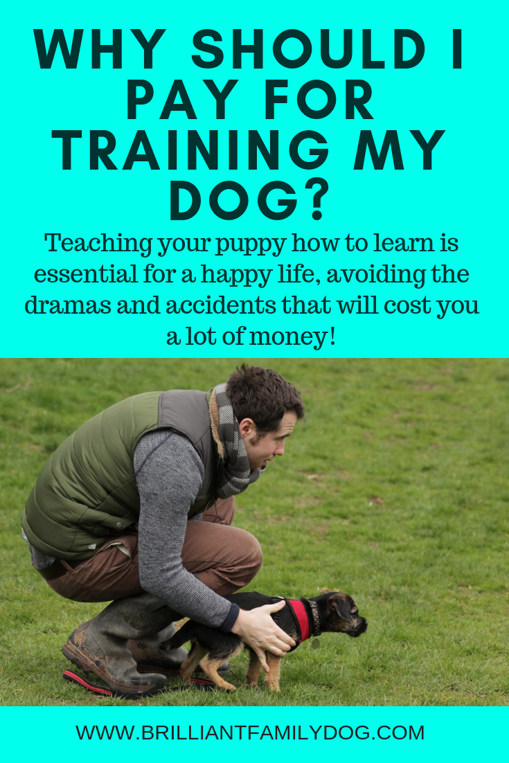 Why should I pay for training my dog? — Brilliant Family Dog