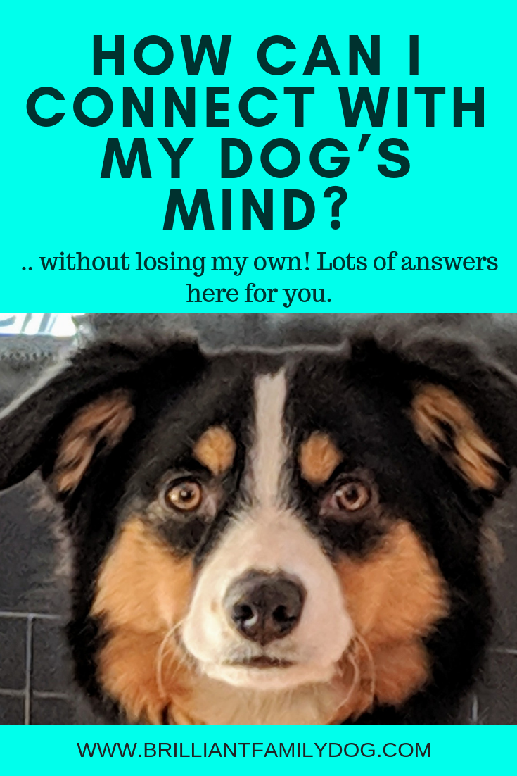 How can I connect with my dog's mind - without losing my own! There are many ways to help your worrisome dog, and we can support you through it all | FREE COURSE! | #newpuppy, #dogtraining, #newrescuedog, #puppytraining, #dogbehavior | www.brilliantfamilydog.com