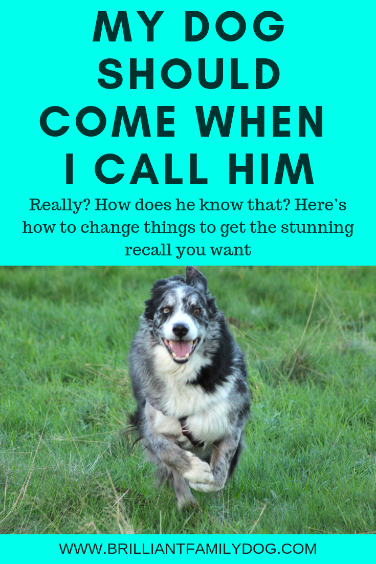 Teach your dog to come back on one call - every time - by changing the way you call her! | FREE GUIDE | #newpuppy, #dogtraining, #newrescuedog, #puppytraining, #dogbehavior | www.brilliantfamilydog.com