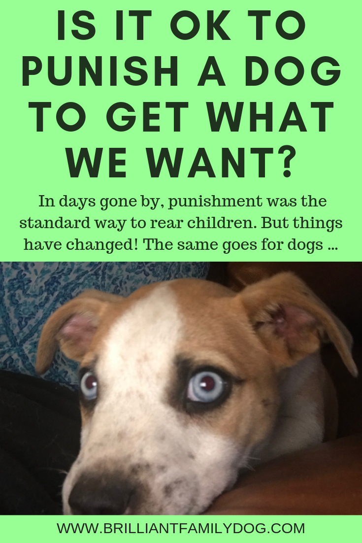 Do we have to punish dogs to get what we want? Absolutely not! The reverse is true. Reward what you like and your dog will learn much faster | FREE EMAIL COURSE | #newpuppy, #dogtraining, #newrescuedog, #puppytraining, #dogbehavior, #reactivedog, #ecollar, #shockcollar, #prongcollar | www.brilliantfamilydog.com