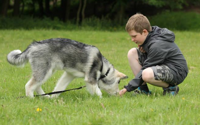 boy with husky pup.png