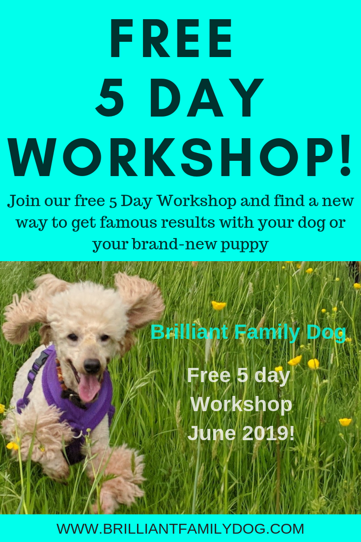 Free 5 Day online Workshop to show you a new - force-free - way to change your dog or new puppy and enjoy life | FREE 5 DAY ONLINE WORKSHOP | #dogtraining, #puppytraining, #newpuppy, #growlydog | www.brilliantfamilydog.com