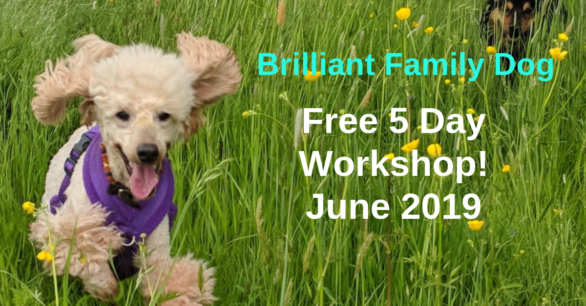 Join our free 5 Day Workshop and find a new dog-friendly way to get fast results with your dog or your brand-new puppy Description Free 5 Day online Workshop to show you a new - force-free - way to change your dog or new puppy and enjoy life | FREE 5 DAY ONLINE WORKSHOP | #dogtraining, #puppytraining, #newpuppy, #growlydog | www.brilliantfamilydog.com