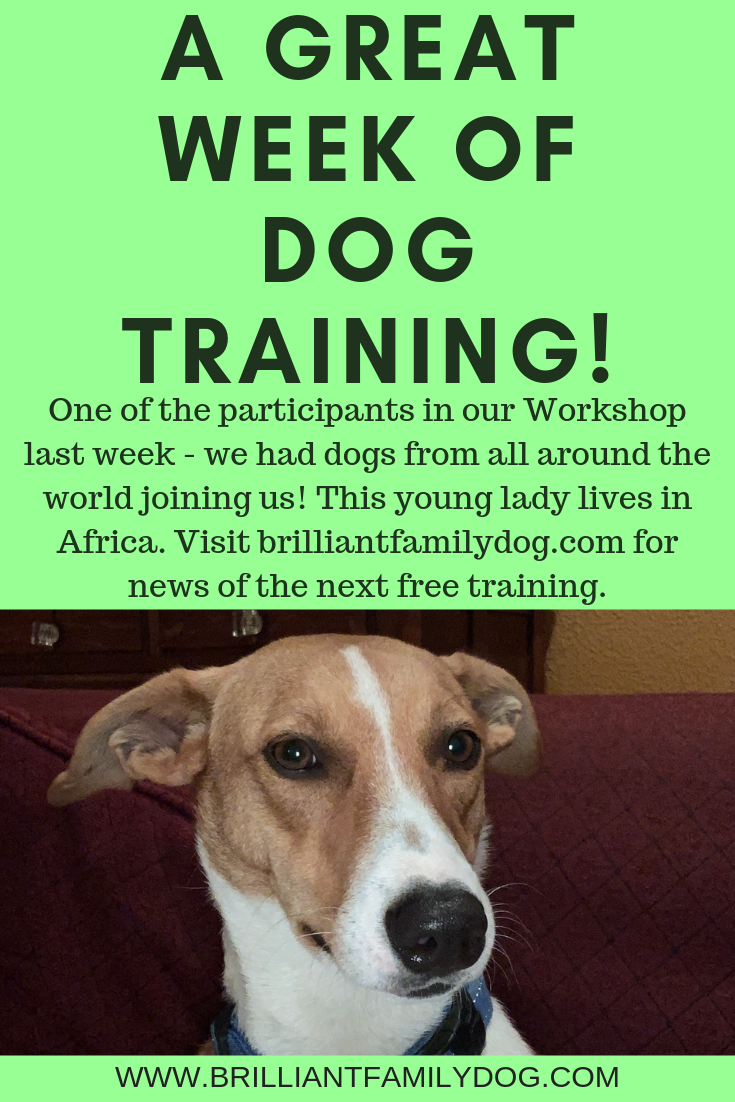 Brilliant Family Dog's Choice Training is the quickest way to build a rewarding relationship with your dog | FREE EMAIL COURSE | #newpuppy, #dogtraining, #newrescuedog, #dogbehavior, #dogimpulsecontrol | www.brilliantfamilydog.com