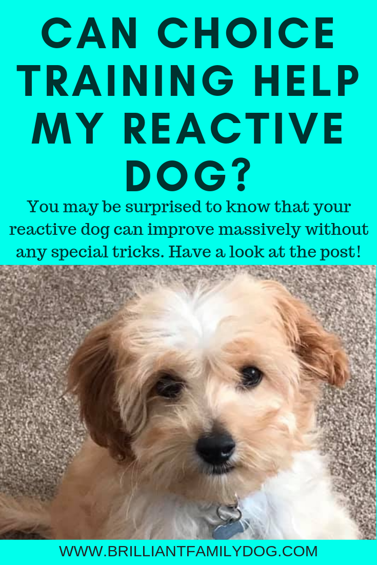 Training your dog with choice is much easier and more effective than you may have thought | FREE EMAIL COURSE | #newpuppy, #dogtraining, #newrescuedog, #puppytraining, #dogbehavior | www.brilliantfamilydog.com