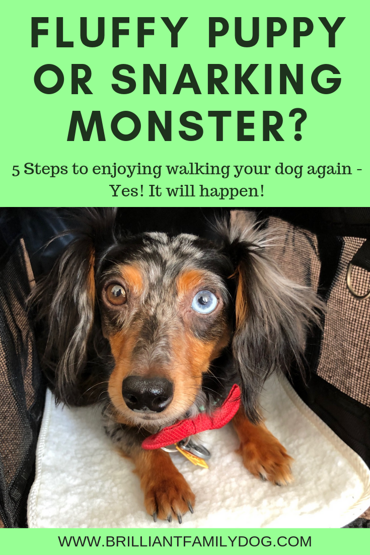 Pins Maxx Payne.pngCan you enjoy walks with your reactive dog again? Change some of the things you're doing and see the change in your dog! | FREE EMAIL COURSE | #aggressivedog, #reactivedog, #anxiousdog, #fearfuldog, #dogtraining, #growlydog | www.brilliantfamilydog.com
