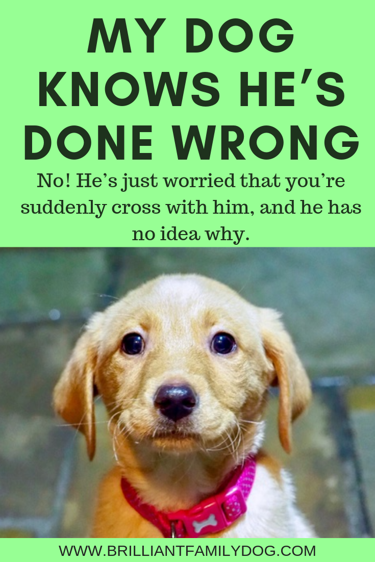 Dogs don't do things for no reason - learn their language! | FREE EMAIL COURSE | #aggressivedog, #reactivedog, #dogtraining, #growlydog, #puppytraining, #dogbodylanguage | www.brilliantfamilydog.com