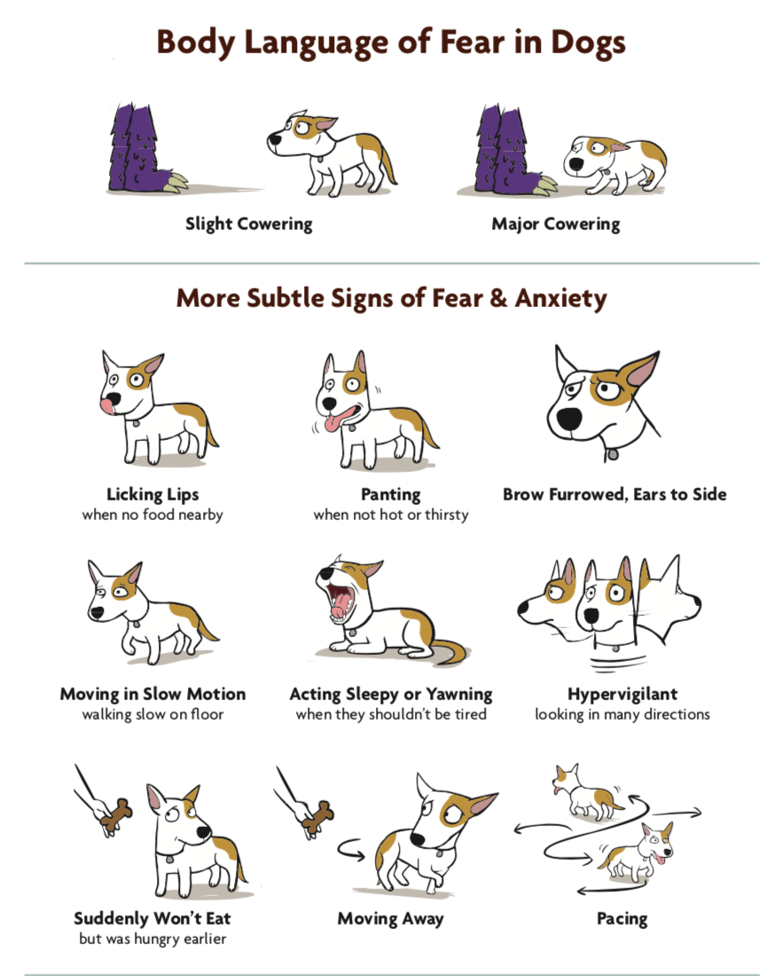 "Dogs don't ""look guilty"" - learn their language and communicate better with your pet!  