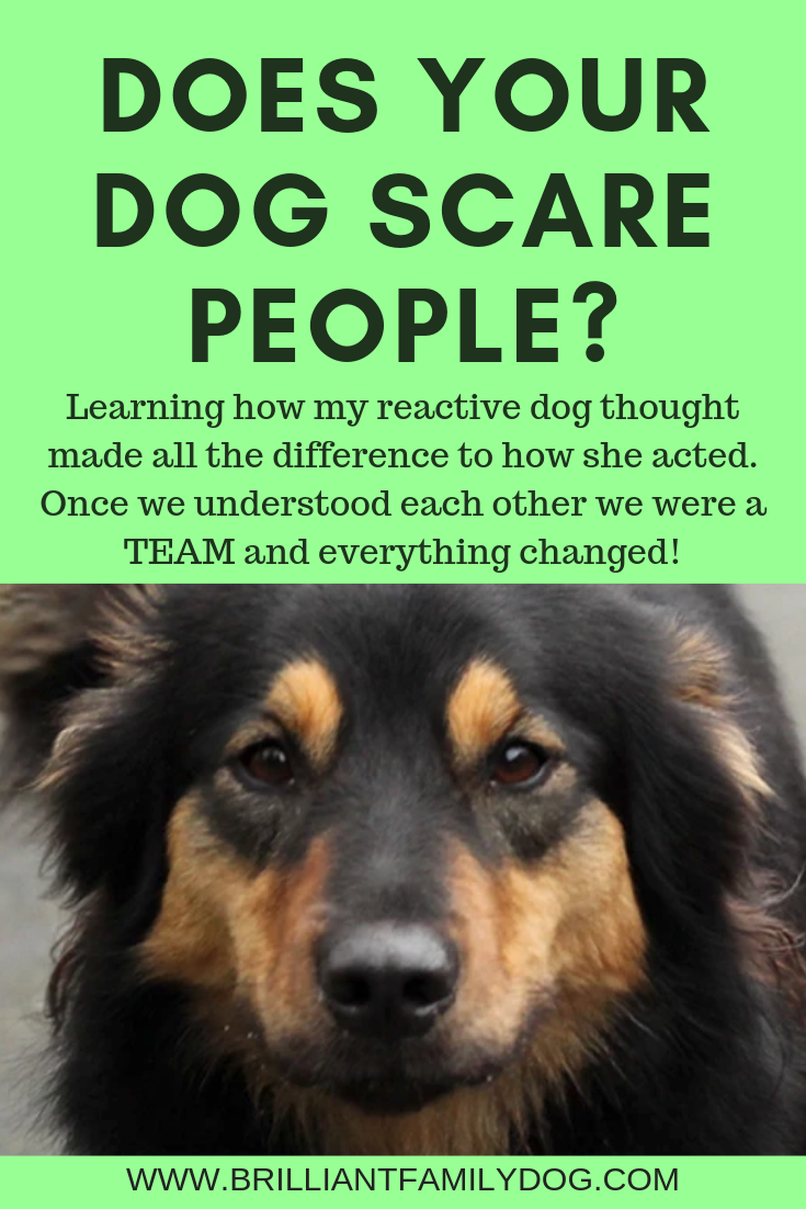 Learning how my reactive dog thought made all the difference to how she acted. The relationship blossomed and our lives changed | FREE EMAIL COURSE | #aggressivedog, #reactivedog, #dogtraining, #growlydog | www.brilliantfamilydog.com