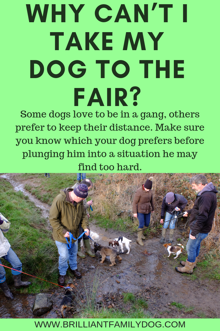Here are some thoughts on how to enjoy an outing with your dog, just as you planned when you got your dog! | FREE EMAIL COURSE | #aggressivedog, #reactivedog, #dogtraining, #growlydog, #anxiousdog, #overfriendlydog | www.brilliantfamilydog.com