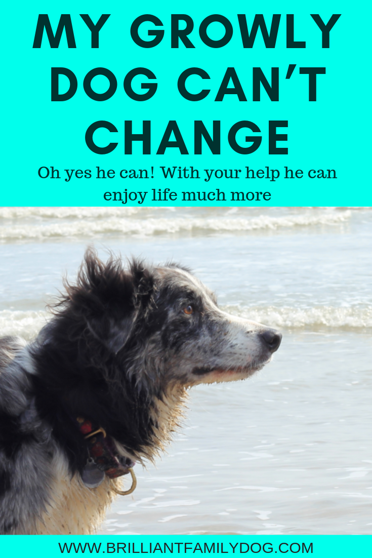 There are lots of kind, dog-friendly, methods to teach your dog he doesn't have to be afraid of everyone and everything | FREE EMAIL COURSE | #aggressivedog, #reactivedog, #dogtraining, #growlydog, #anxiousdog, #overfriendlydog | www.brilliantfamilydog.com