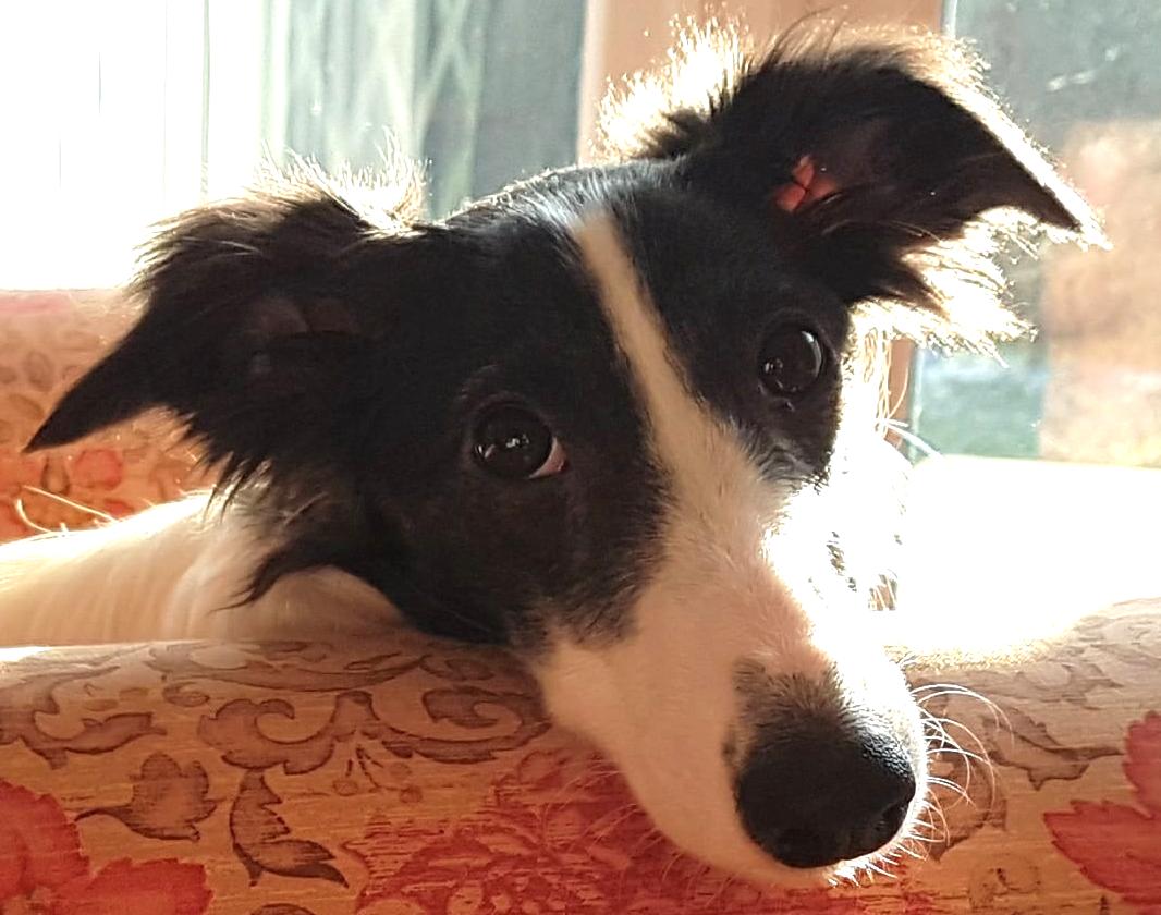www.brilliantfamilydog.com