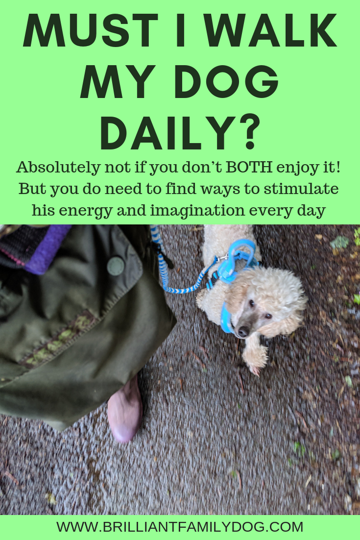 The Daily Dog Walk is a myth dreamt up by people who don't understand how dogs tick | FREE EMAIL COURSE | #aggressivedog, #reactivedog, #dogtraining, #growlydog, #dogbehavior, #anxiousdog, #overfriendlydog | www.brilliantfamilydog.com