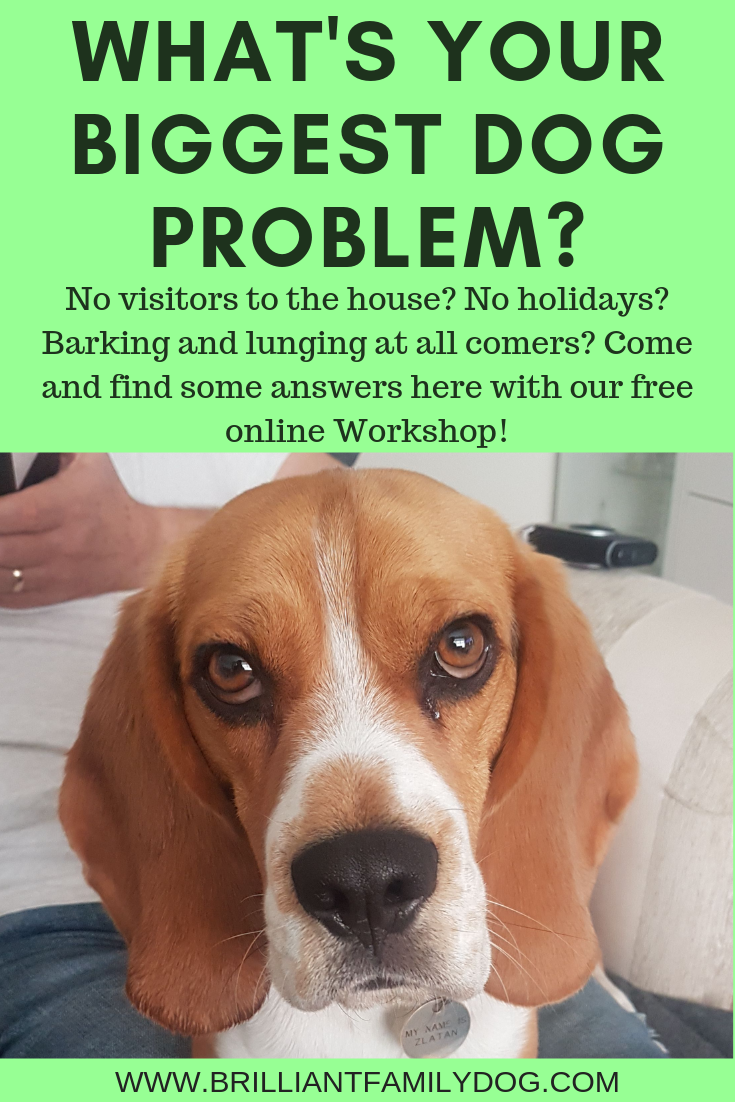 What's your biggest frustration with your dog? And do you think you'll never be able to fix it? Come to our force-free, dog-friendly Live Workshop and find a new way to make the changes you want | FREE ONLINE WORKSHOP! | #aggressivedog, #reactivedog, #dogtraining, #growlydog, #anxiousdog, #overfriendlydog | www.brilliantfamilydog.com