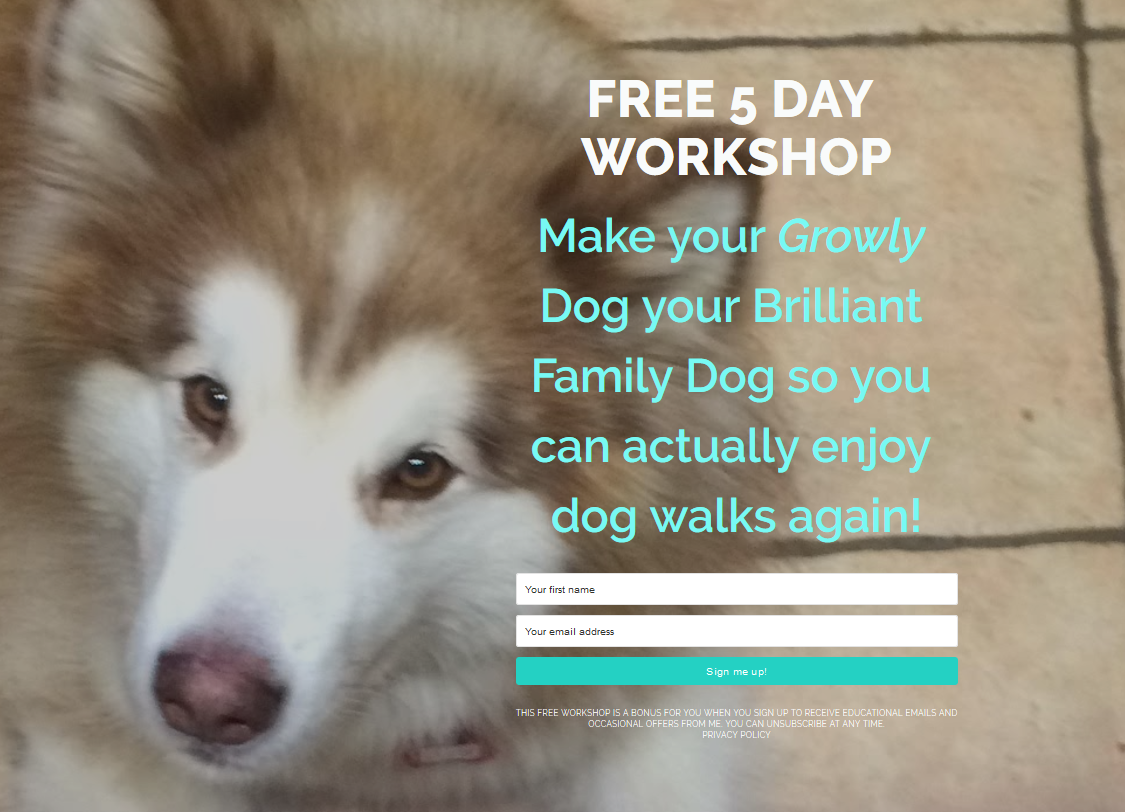 Want to transform your growly dog in just 5 days? All without force?  | FREE LIVE WORKSHOP  | #aggressivedog, #reactivedog, #dogtraining, #growlydog, #anxiousdog, #overfriendlydog | www.brilliantfamilydog.com