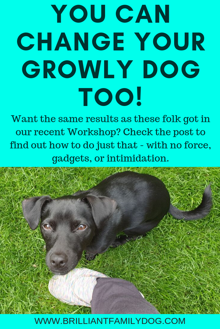 Do we have to punish dogs to get what we want? Absolutely not! The reverse is true. Reward what you like and your dog will learn much faster | 5 DAY WORKSHOP | #growlydog, #dogtraining, #newrescuedog, #puppytraining, #dogbehavior, #reactivedog, #ecollar, #shockcollar, #prongcollar | www.brilliantfamilydog.com