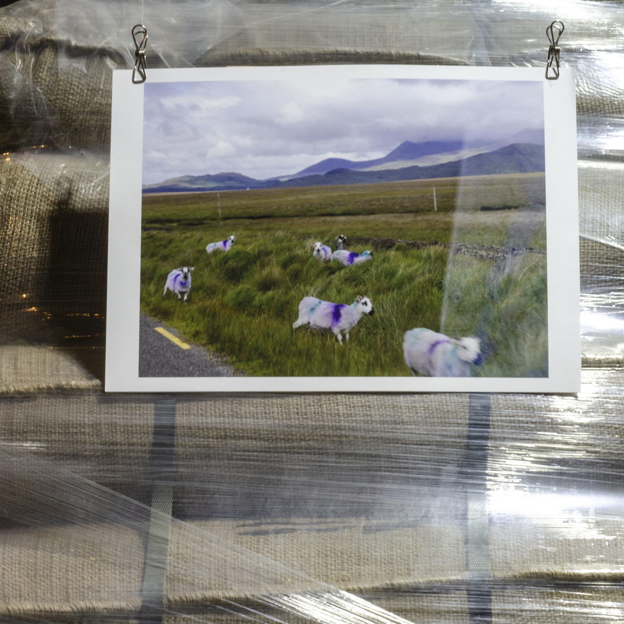 Antony Lyons, Ireland, From the exchange 'Through the Window,' with Zoe Galinsoga.jpg
