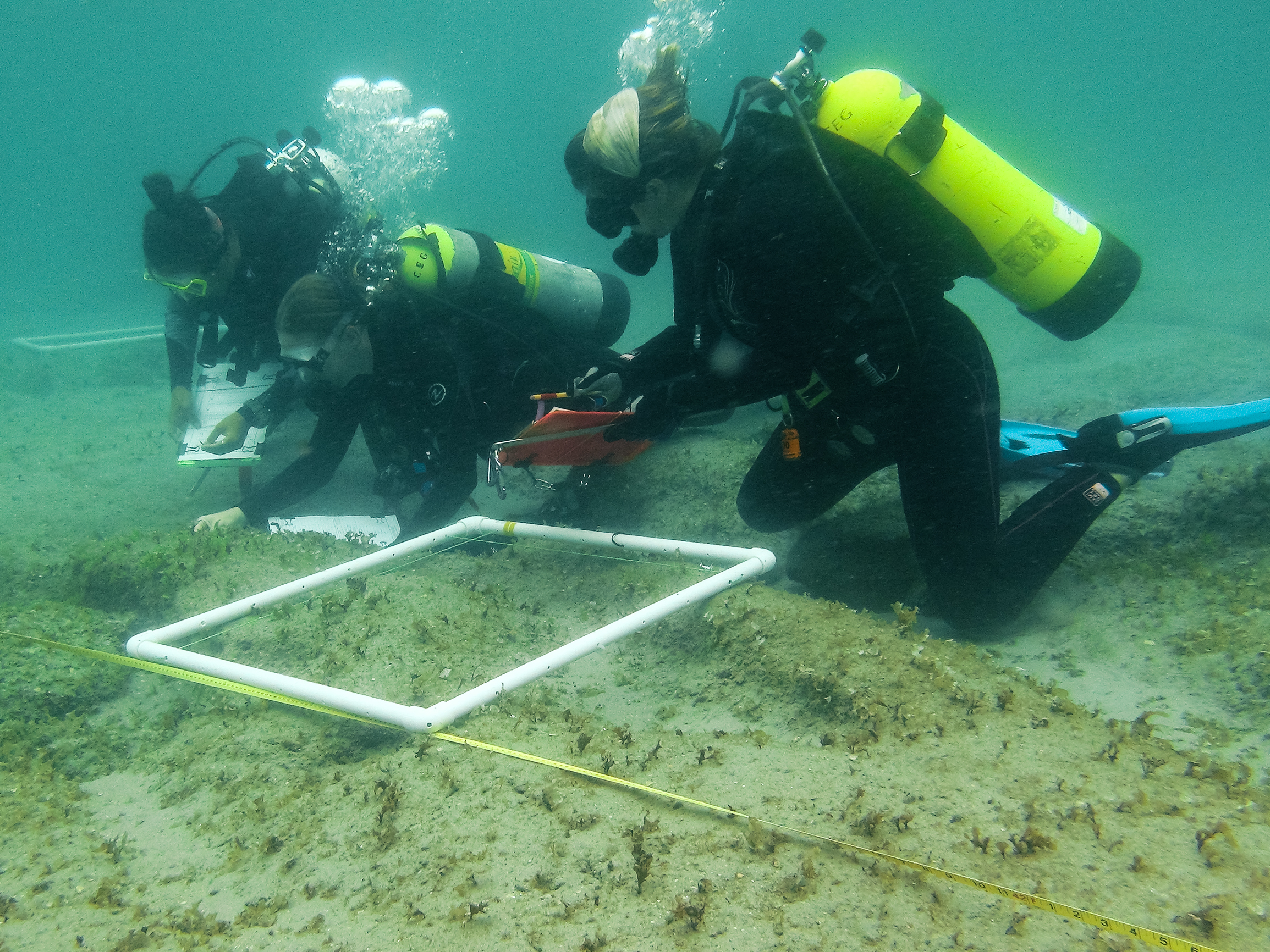 me and the crew probably trying to identify some macroalgae