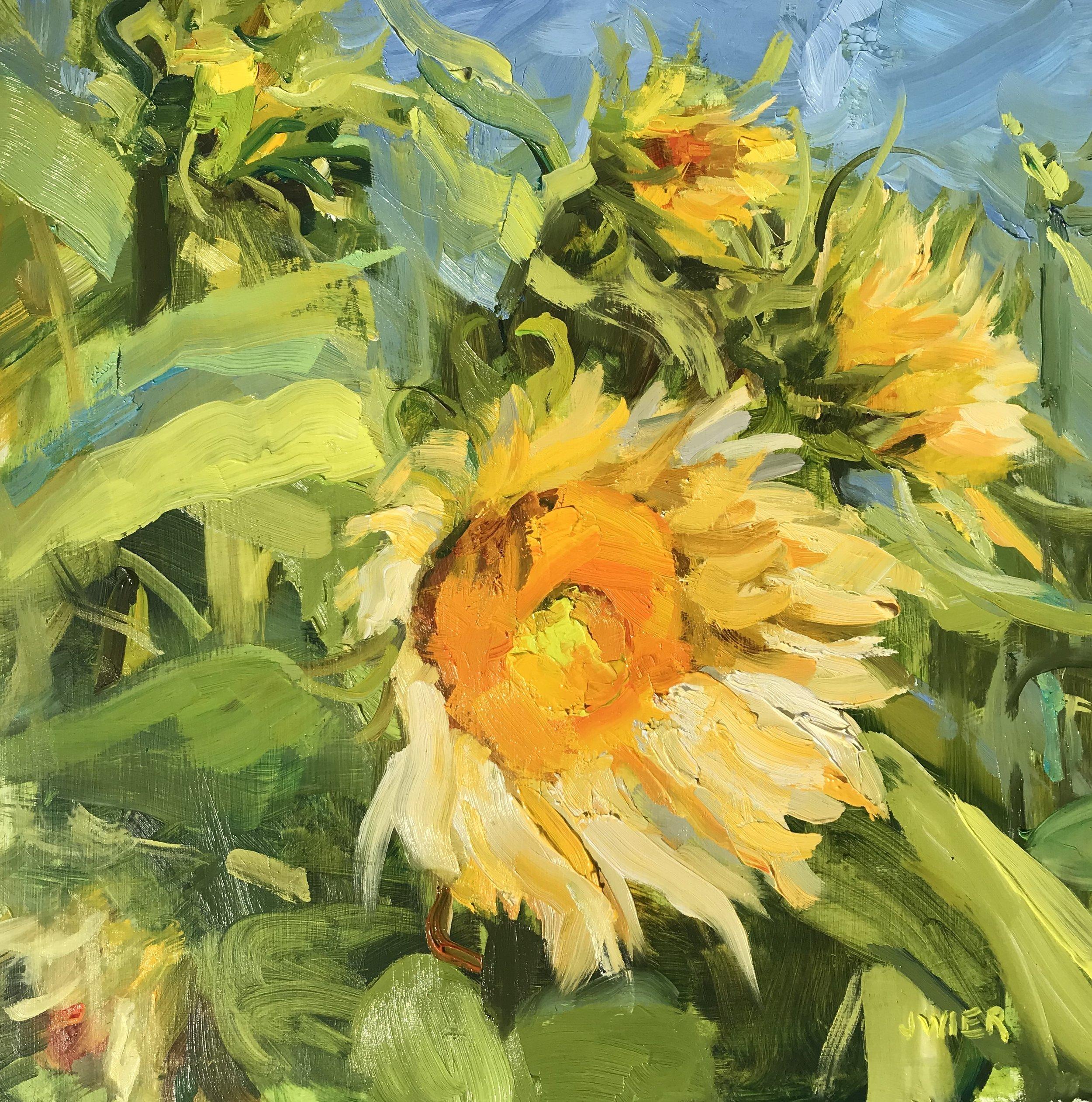 White Lite Sunflowers