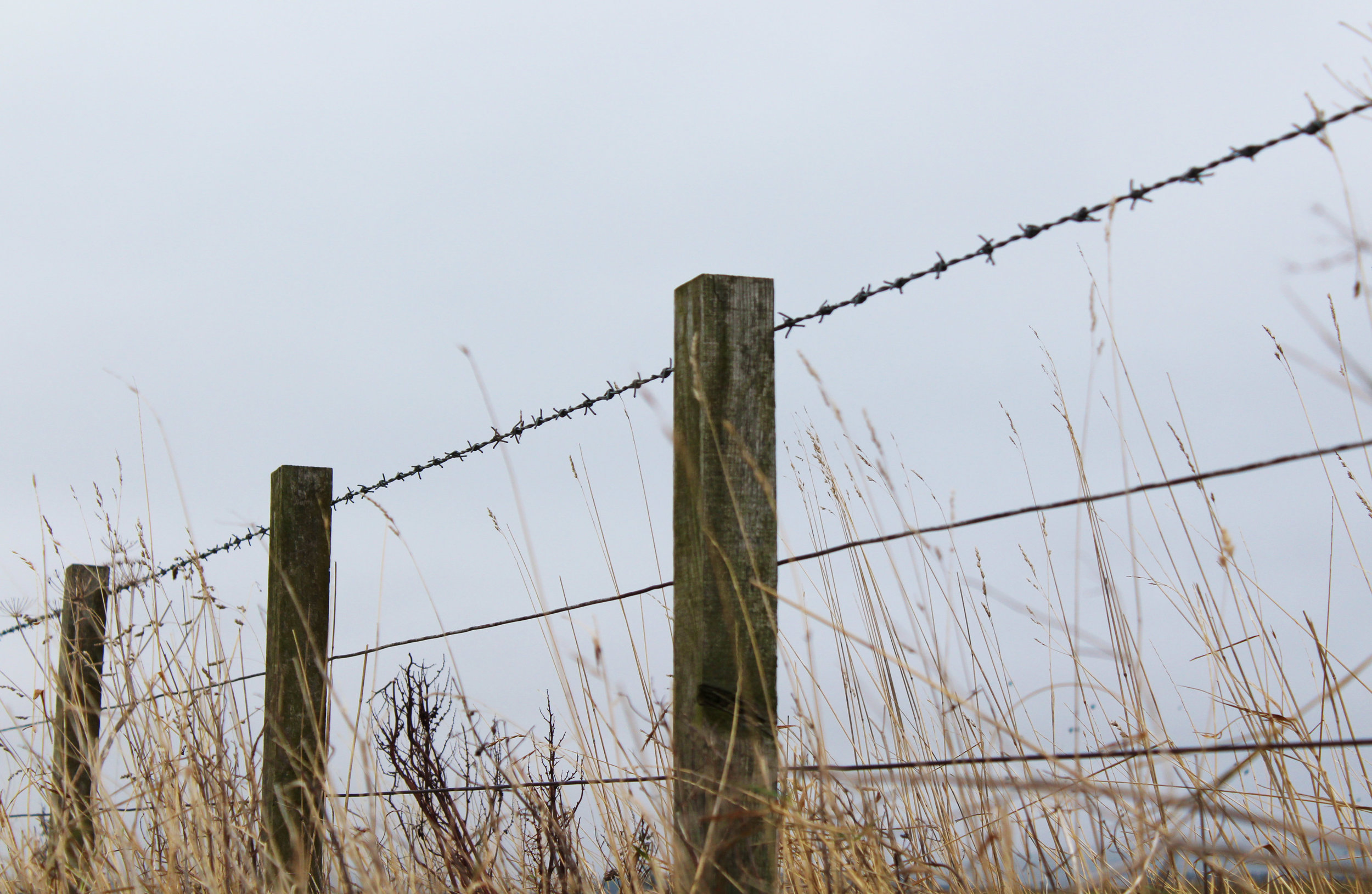 Barbed wire fencing commonly used for creating boundaries in the landscape ( photographed outside of Gifford in East Lothian, Scotland)