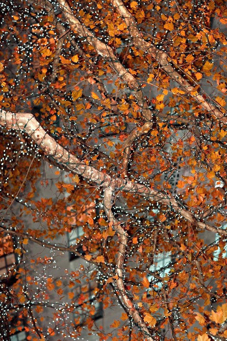 "FESTIVE TREE (Without Framing), Qingshan Wang, 30"" X 20"", Digital Inkjet Print on Fine Art Archival Paper, 2017"