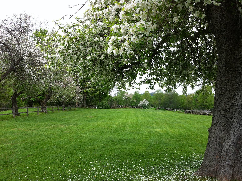 orchard+6.jpg