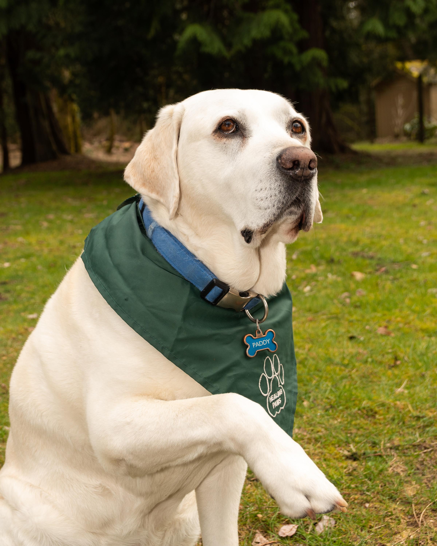 Paddy Dudzik, Therapy Dog