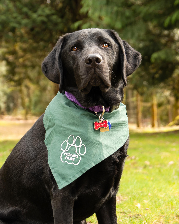 Viggo Dudzik, Therapy Dog/ Therapy Animal