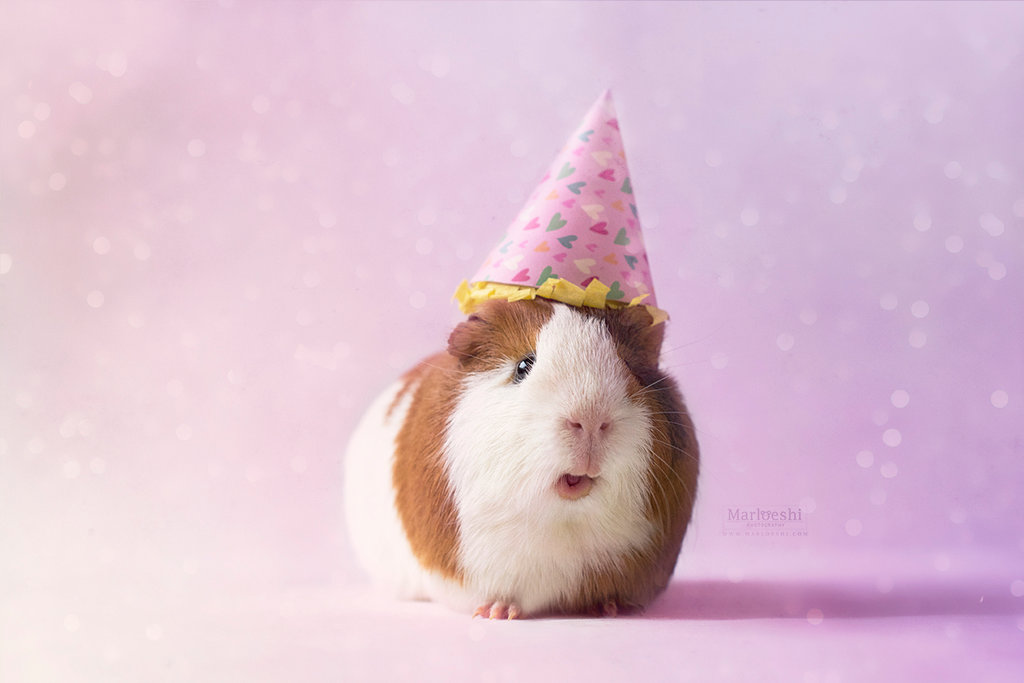 party_piggy__by_marloeshi-dao4kqq.jpg