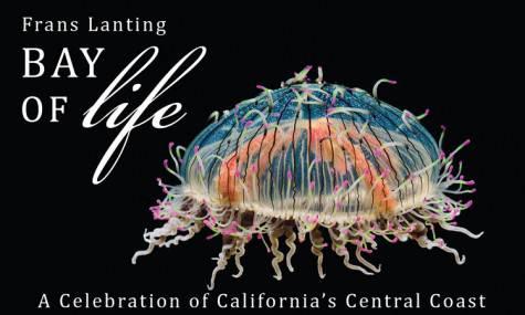 Bay of Life Poster (1).jpg