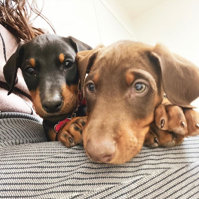 They are growing so fast & we need your help!  Did you see today's video where someone names one of the puppies?! **We want YOU to name the other PUPPY!** Write your suggestions in the comments below! (We will announce it in another video) . . #nameourpuppy #toa #theohanaadventure #ohanapups #toakeiki