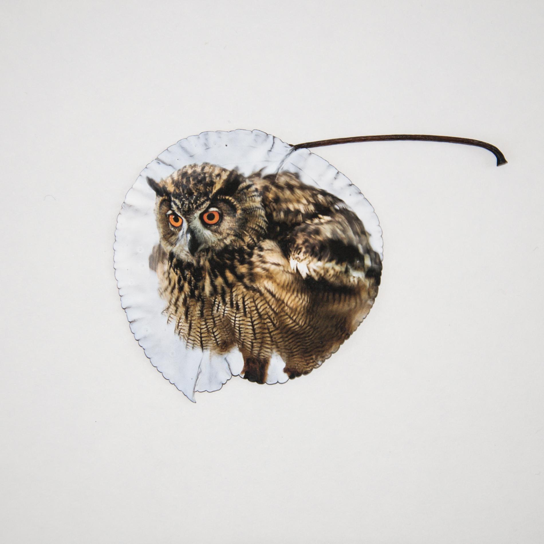 owll_leaf.jpg
