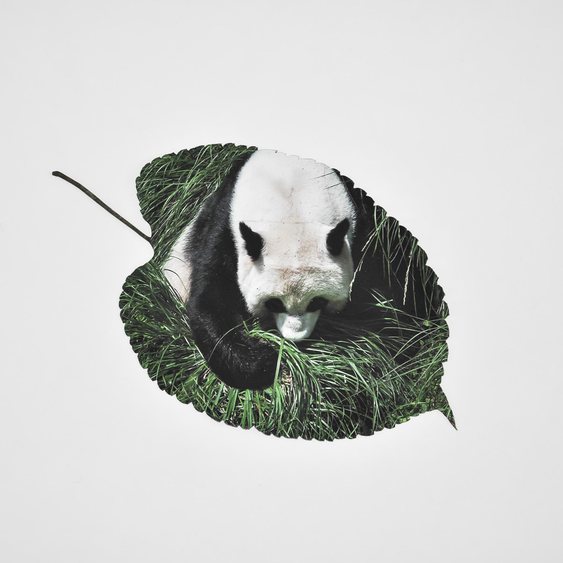panda_leaf.jpg